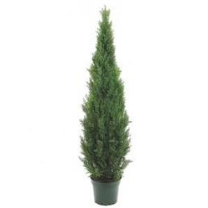 Cedar Topiary Tree 1.8m