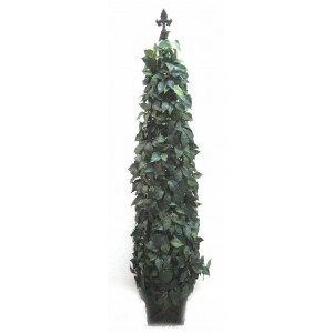 Ivy Pyramid Topiary Tree 5ft