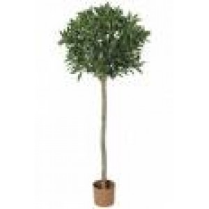 Topiary Tree - French Laurel Ball