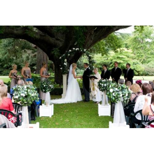 Topiary Tree Hire - click for more info